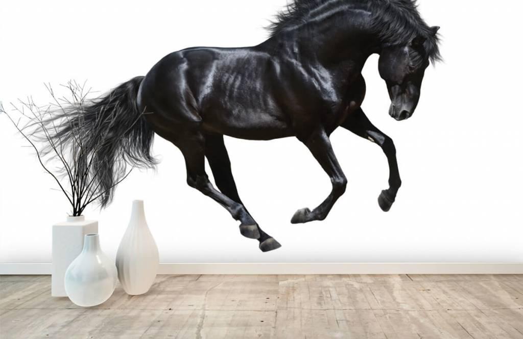 Horses - Zwarte hengst - Chambre des enfants 8
