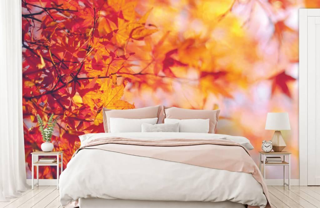 Leaves - Feuilles d'automne - Chambre à coucher 1