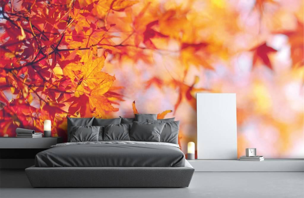 Leaves - Feuilles d'automne - Chambre à coucher 2