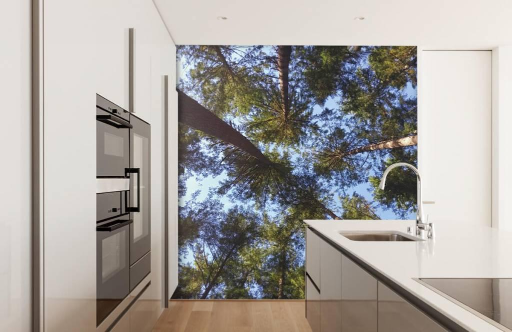 Papier peint de la forêt - Hauts conifères - Chambre à coucher 1
