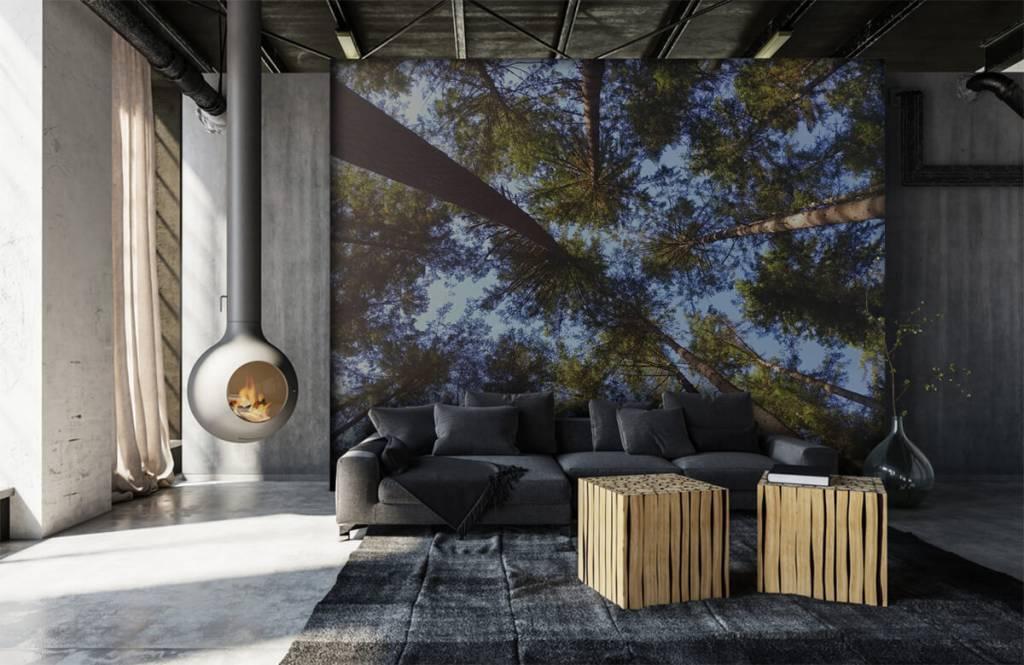 Papier peint de la forêt - Hauts conifères - Chambre à coucher 6
