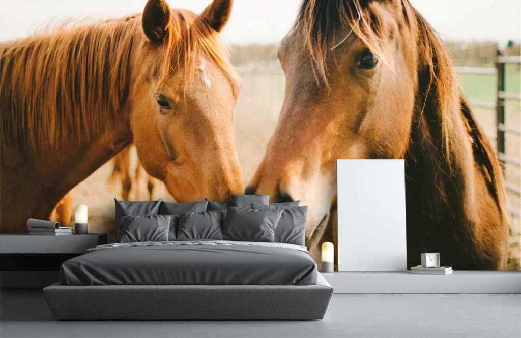 Horses - Deux chevaux - Chambre des enfants 2