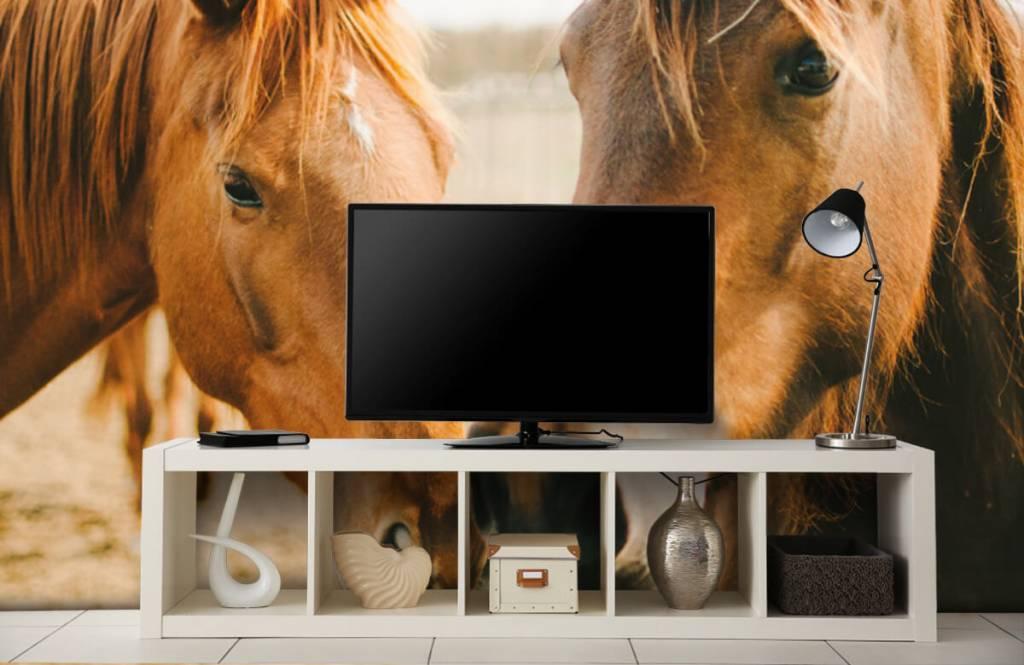 Horses - Deux chevaux - Chambre des enfants 3