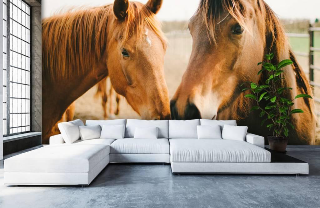 Horses - Deux chevaux - Chambre des enfants 4
