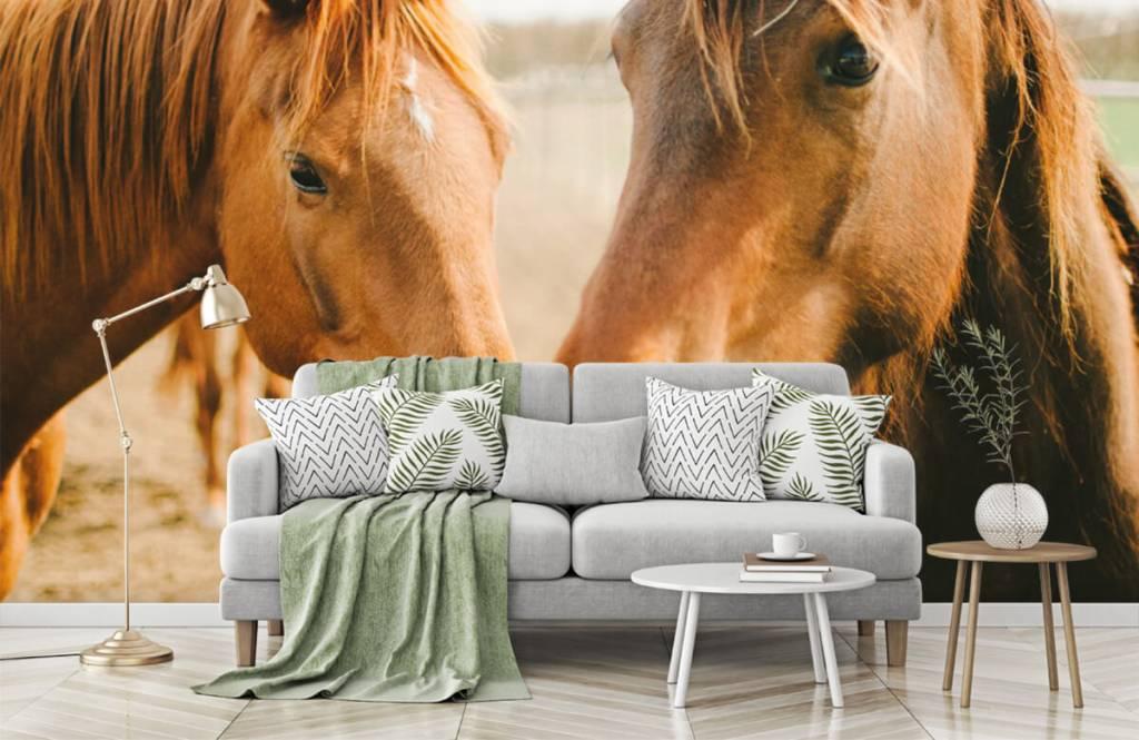 Horses - Deux chevaux - Chambre des enfants 5