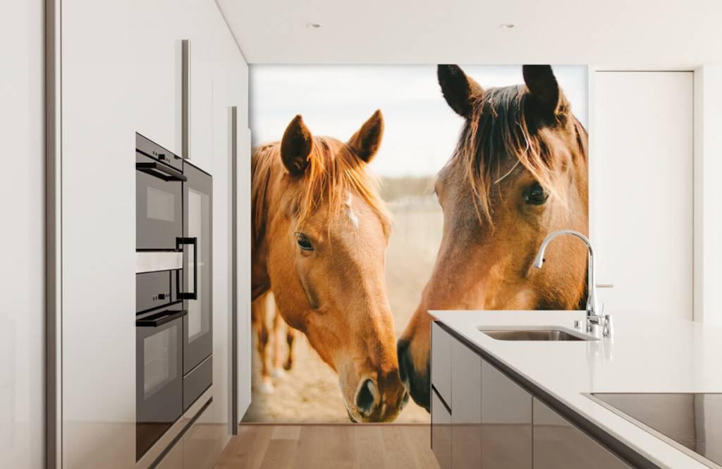 Horses - Deux chevaux - Chambre des enfants 7