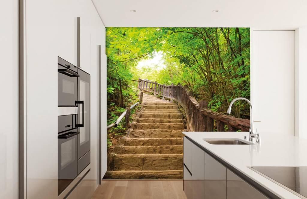 Papier peint de la forêt - Escalier en forêt - Chambre à coucher 1