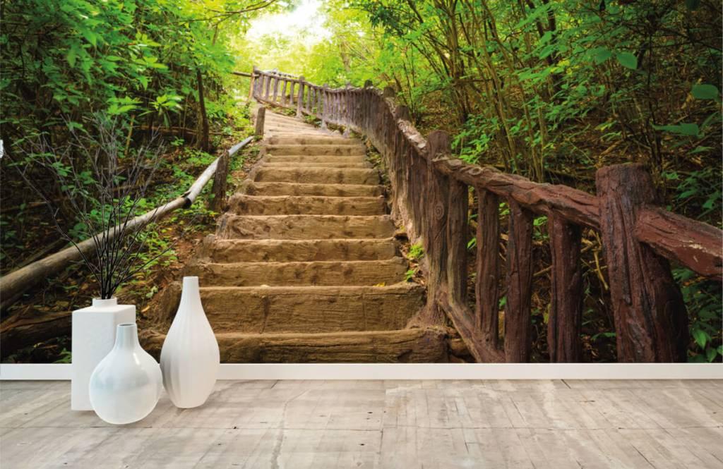 Papier peint de la forêt - Escalier en forêt - Chambre à coucher 8