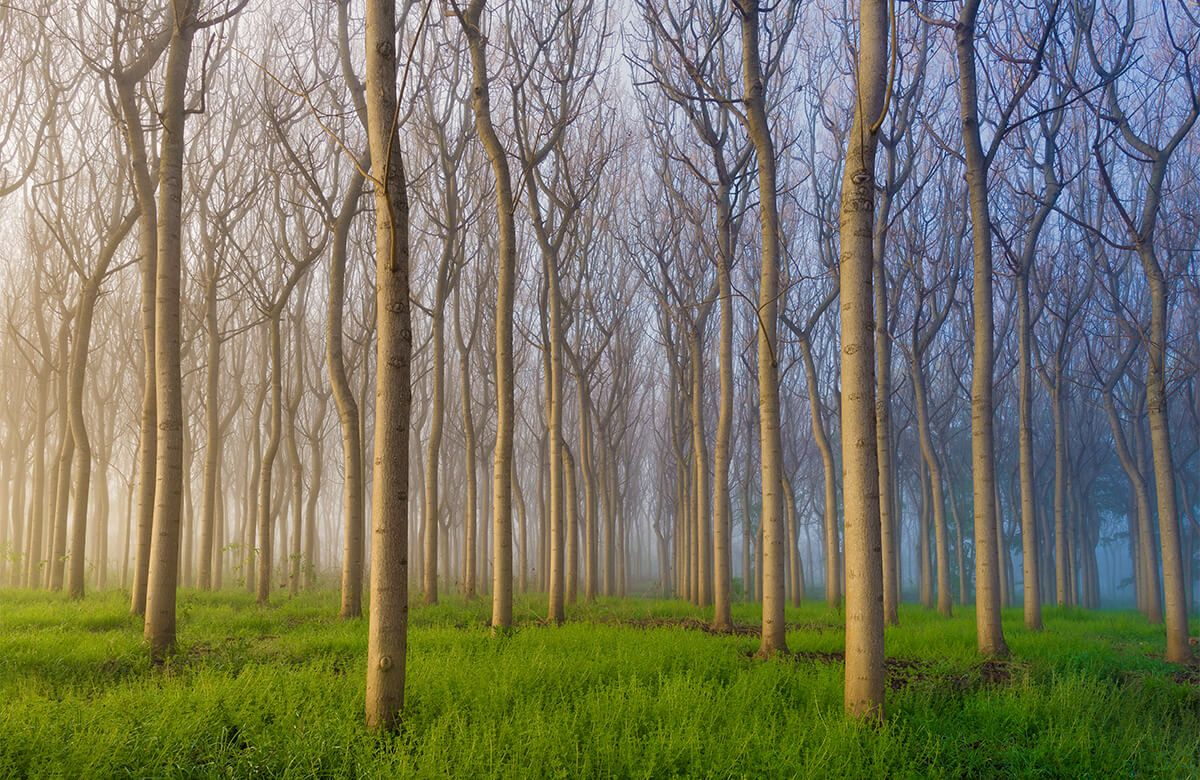 Landscape Morning of the Forest