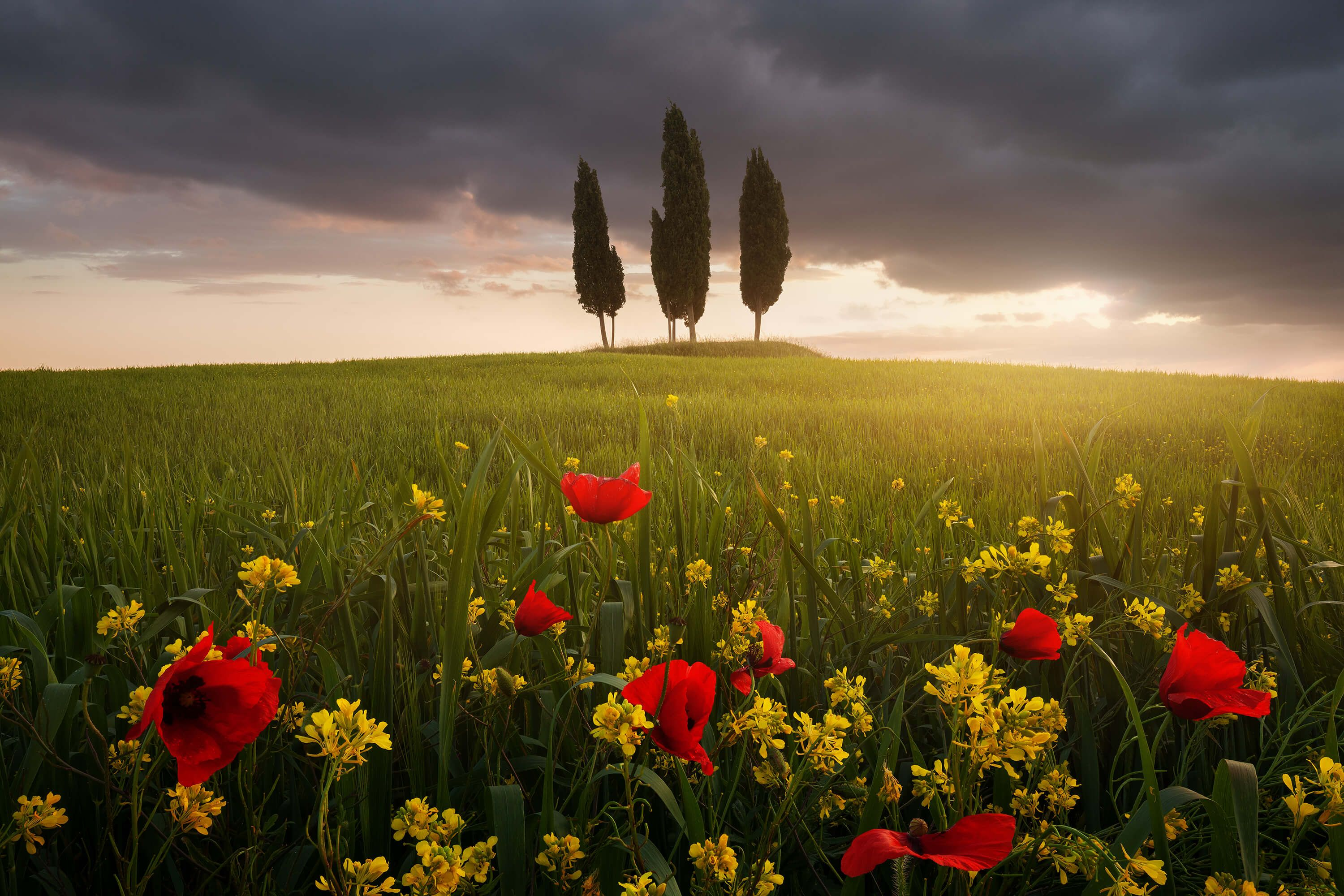 Landscape Blooming Tuscany