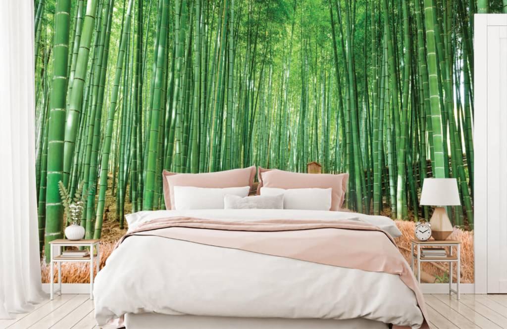 Papier peint Paysage - Escalier entre les plantes de bambou - Salle de séjour 2