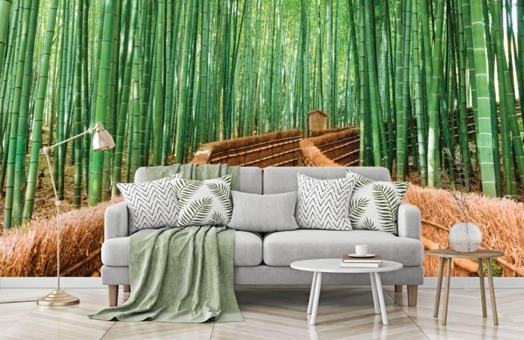 Papier peint Paysage - Escalier entre les plantes de bambou - Salle de séjour 8