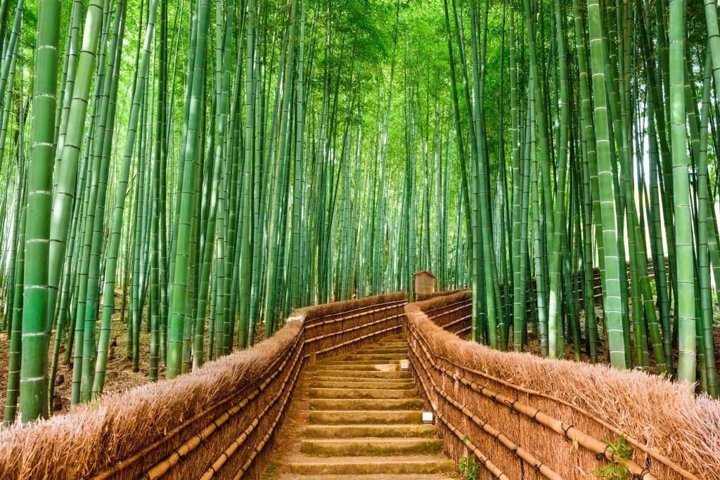 Papier peint Paysage - Escalier entre les plantes de bambou - Salle de séjour 9