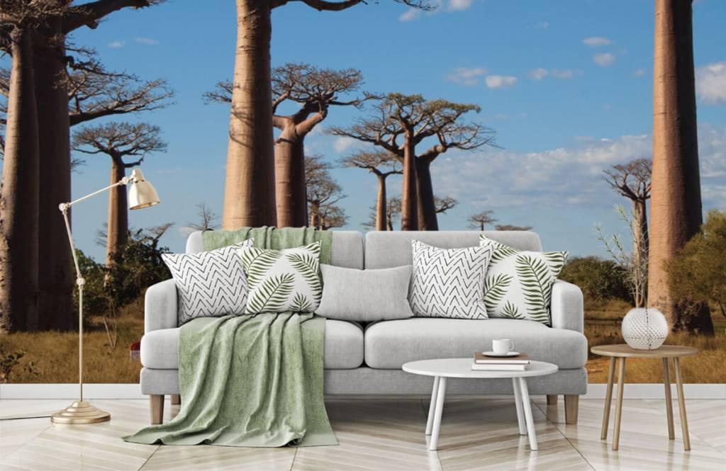 Papier peint Paysage - Baobabs - Salle de séjour 1