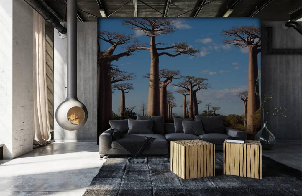 Papier peint Paysage - Baobabs - Salle de séjour 2