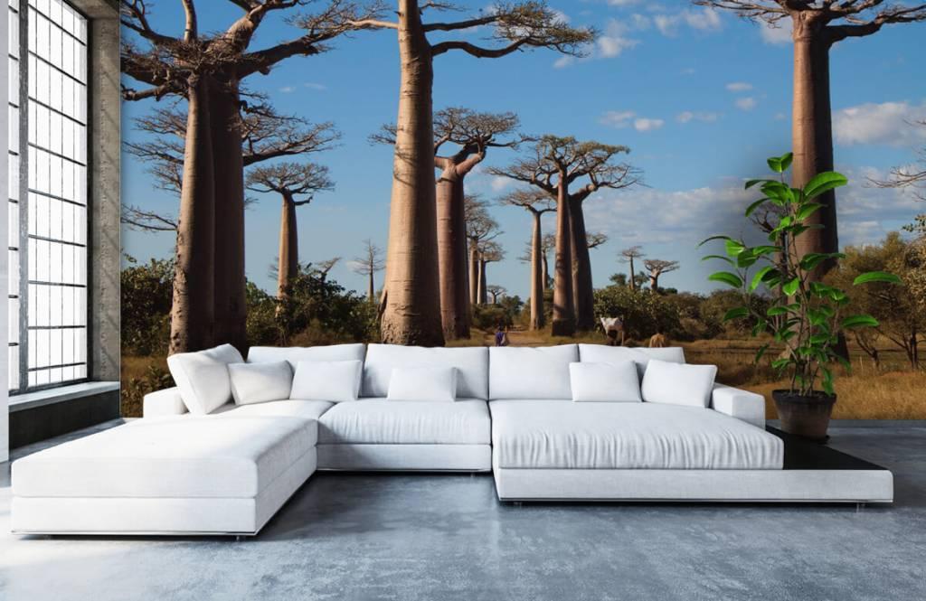 Papier peint Paysage - Baobabs - Salle de séjour 3