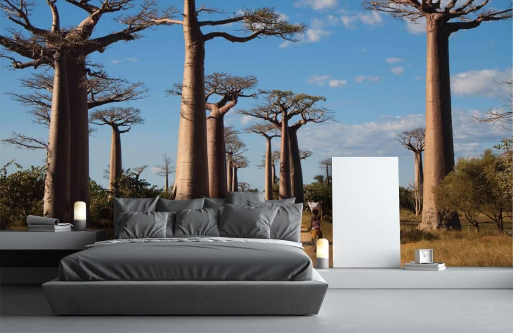 Papier peint Paysage - Baobabs - Salle de séjour 4