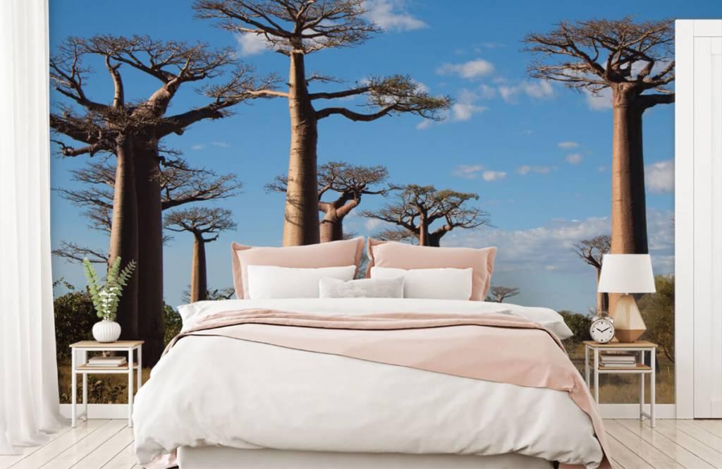 Papier peint Paysage - Baobabs - Salle de séjour 5