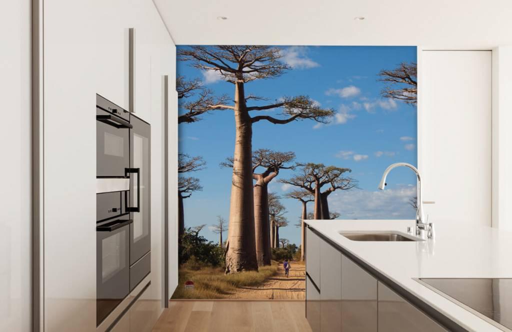 Papier peint Paysage - Baobabs - Salle de séjour 7