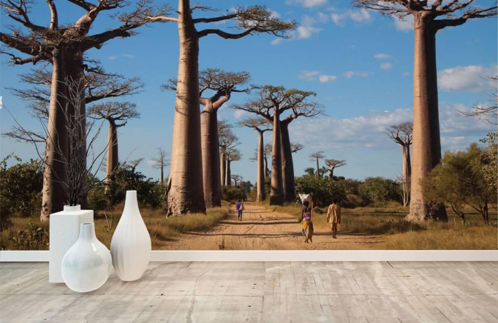 Papier peint Paysage - Baobabs - Salle de séjour 8