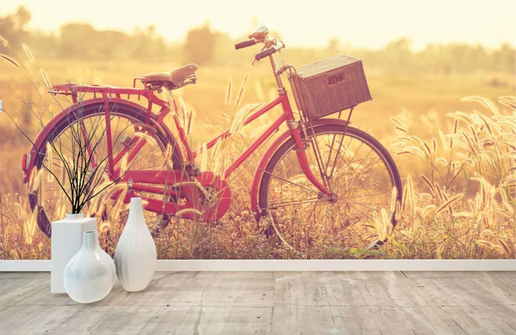 Papier peint Paysage - Vélo d'époque - Chambre à coucher 8