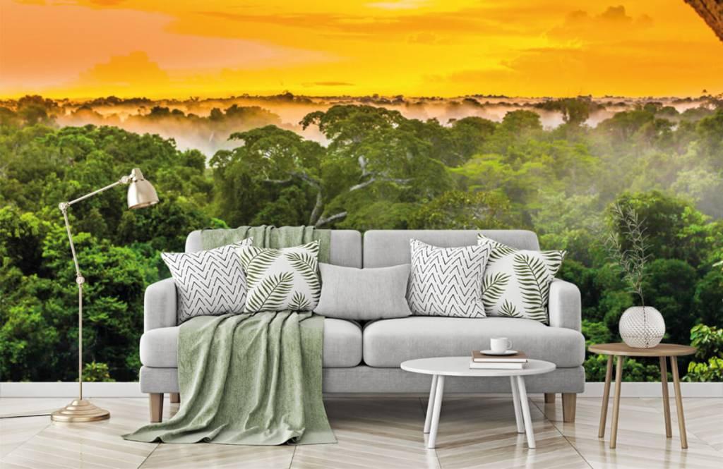Arbres - Forêt tropicale au Brésil - Chambre à coucher 8