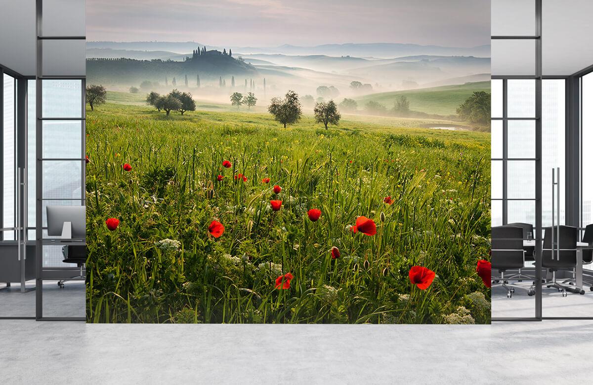 Landscape Tuscan spring 7