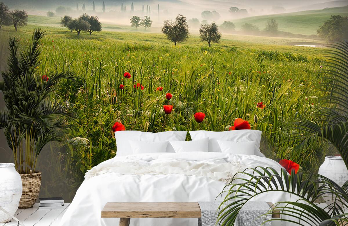 Landscape Tuscan spring 3