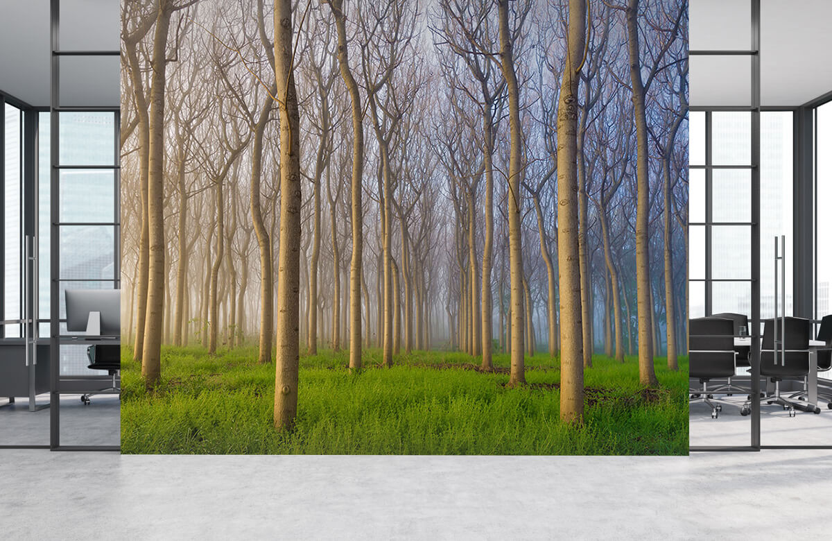 Landscape Morning of the Forest 3