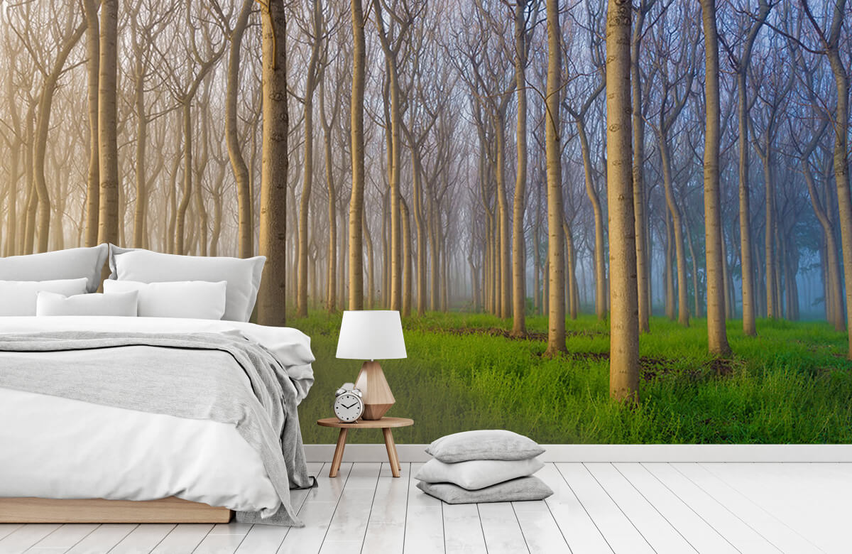 Landscape Morning of the Forest 7