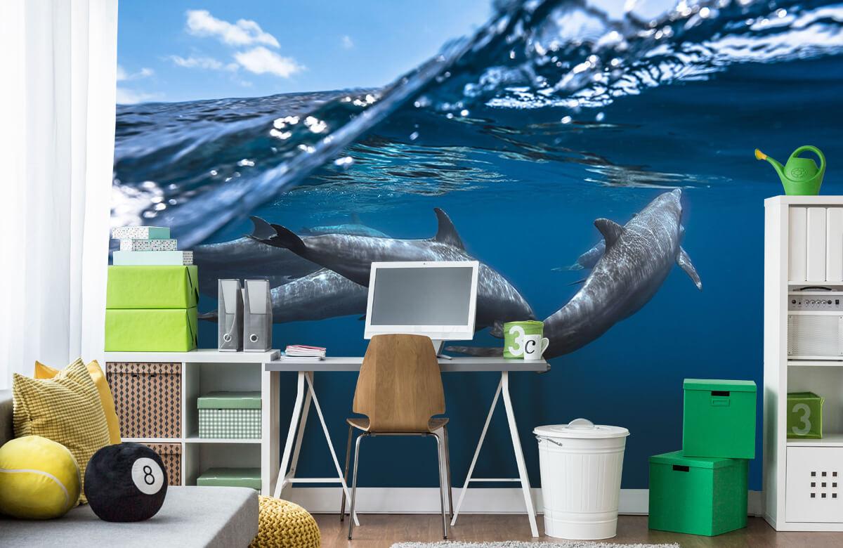 Underwater Dolphins 10