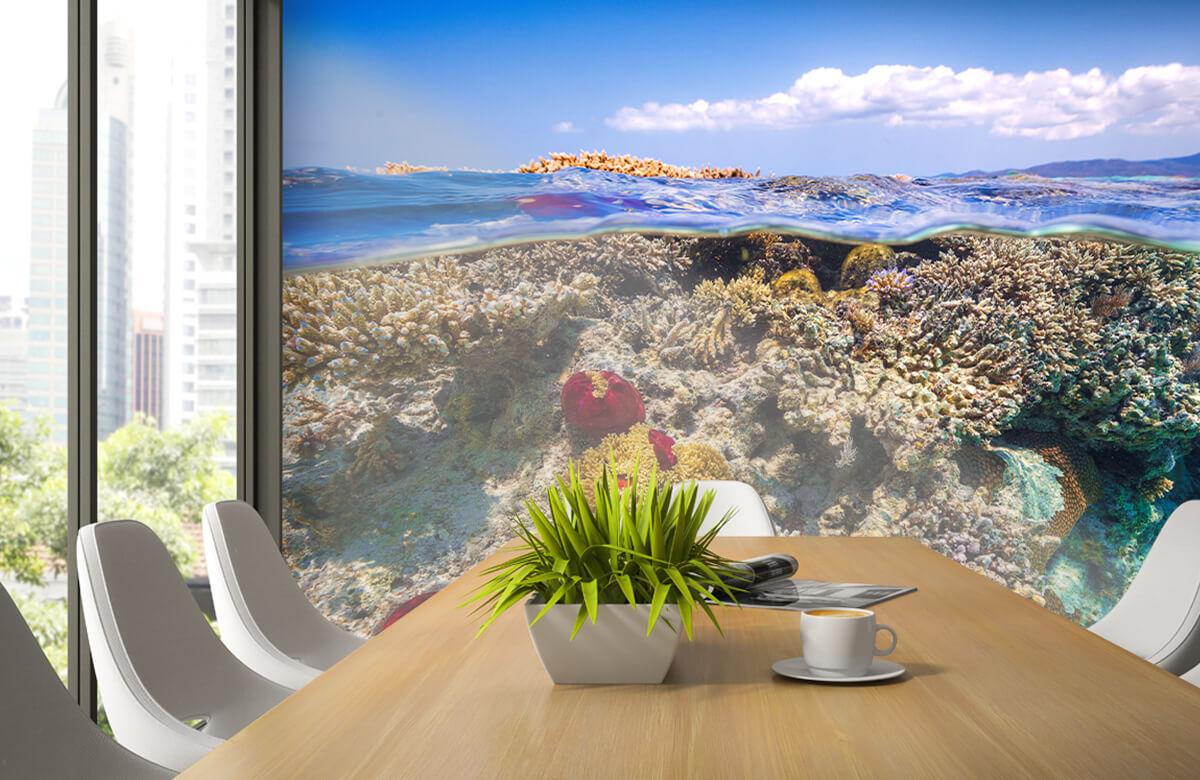 Underwater Mayotte : The Reef 1