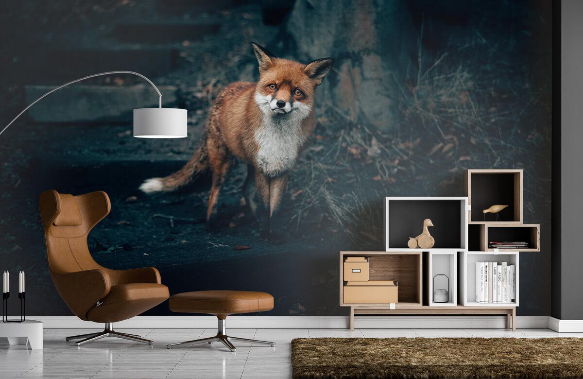 Wallpaper Un renard curieux 5