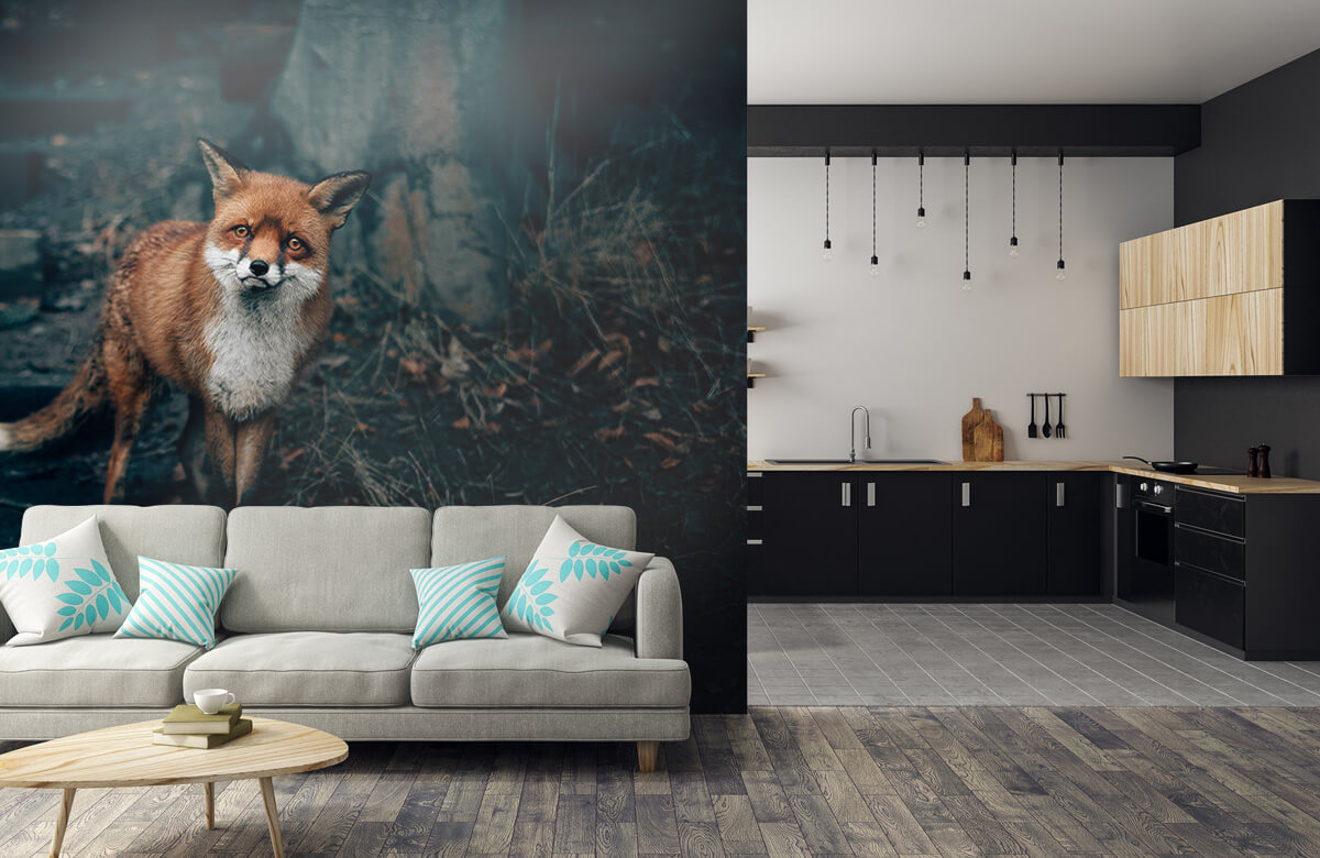 Wallpaper Un renard curieux 10