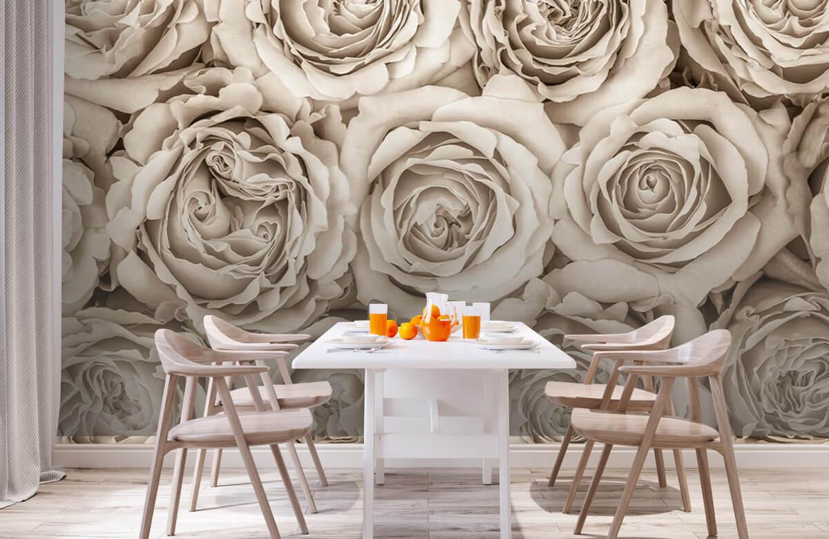 Historique des roses 3