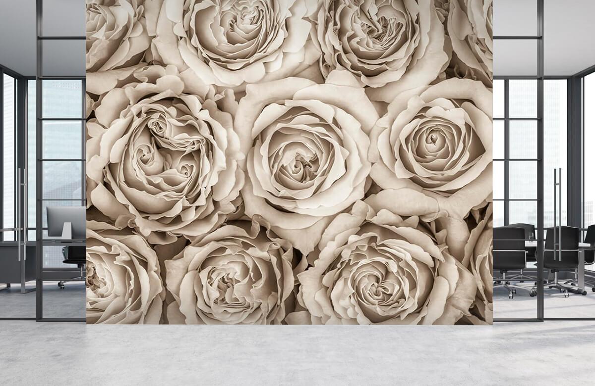 Historique des roses 6