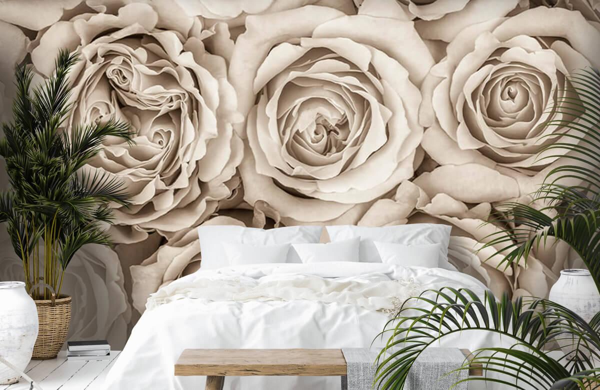 Historique des roses 8