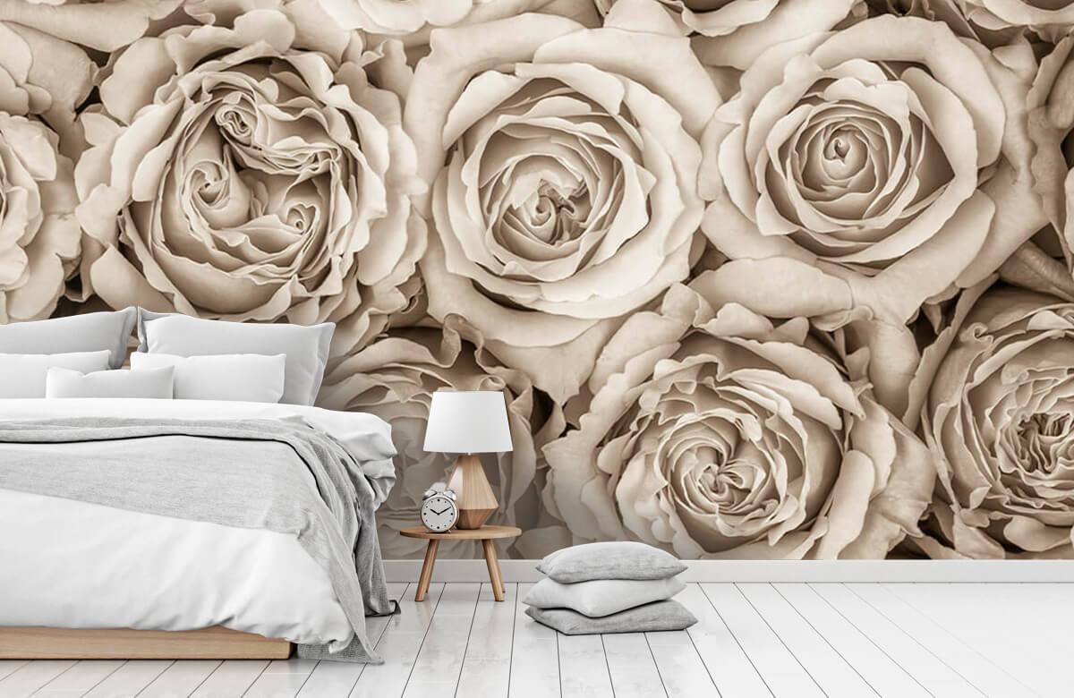 Historique des roses 11