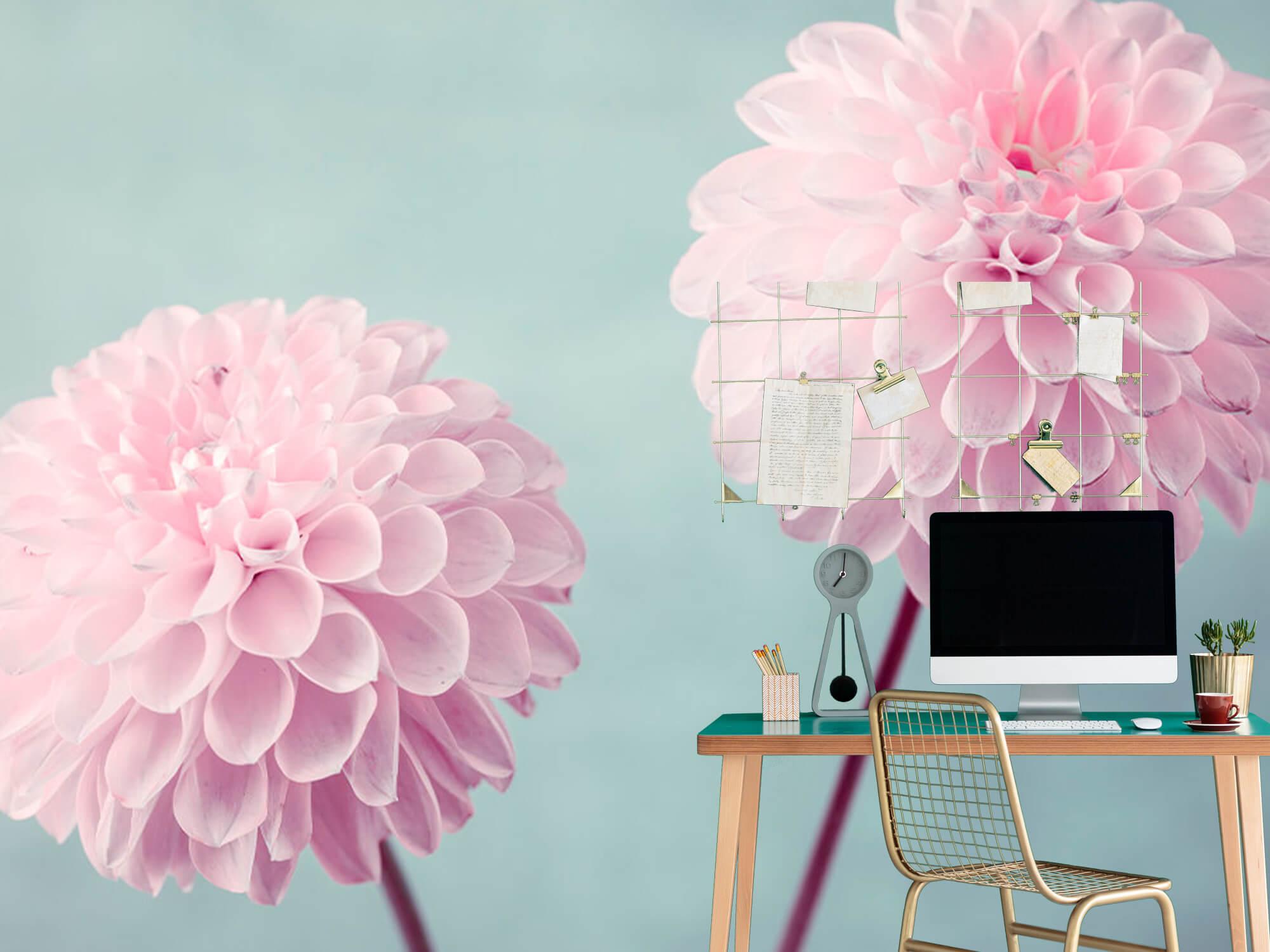 Deux fleurs de Dahlia 10