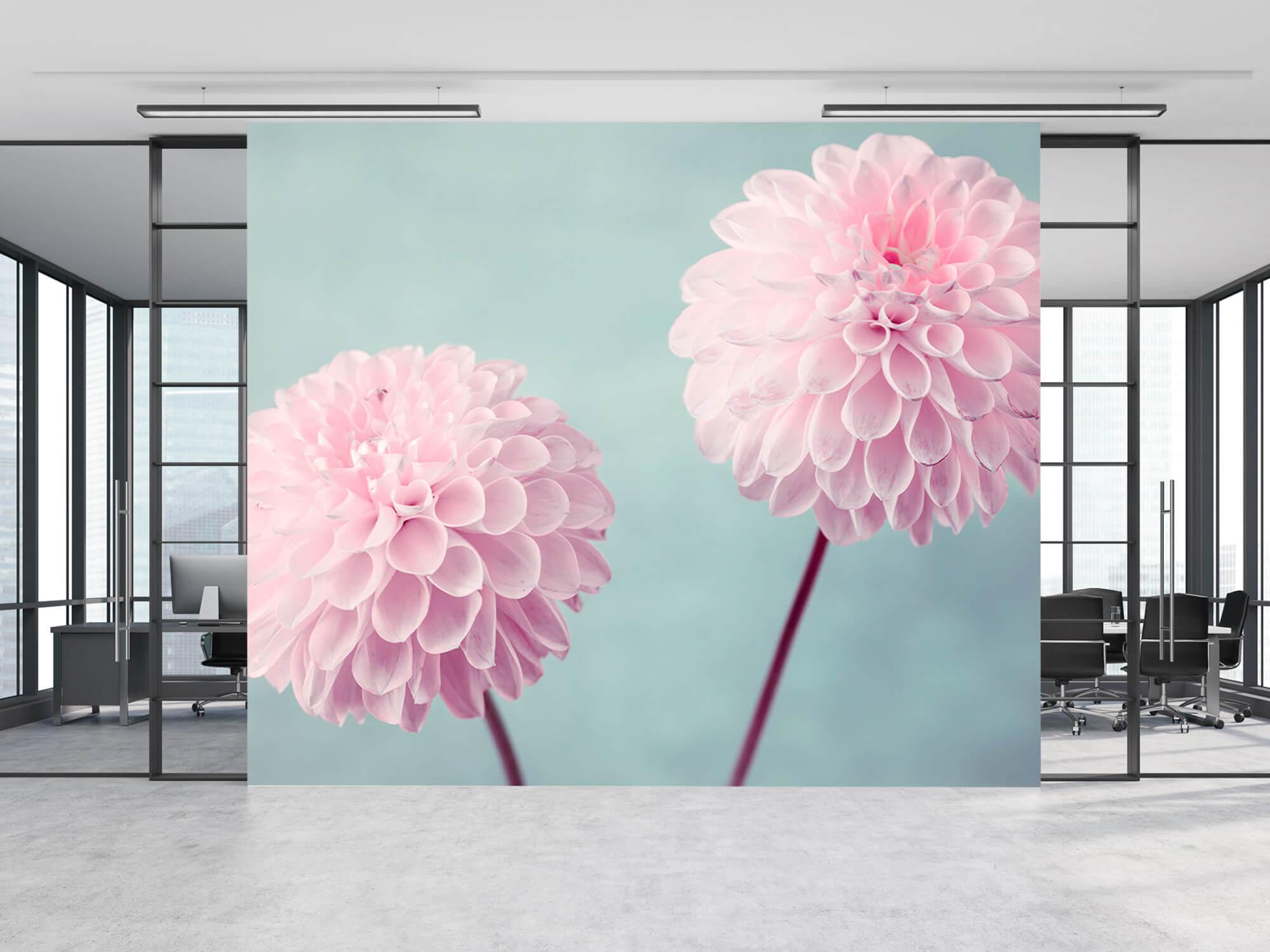 Deux fleurs de Dahlia 12