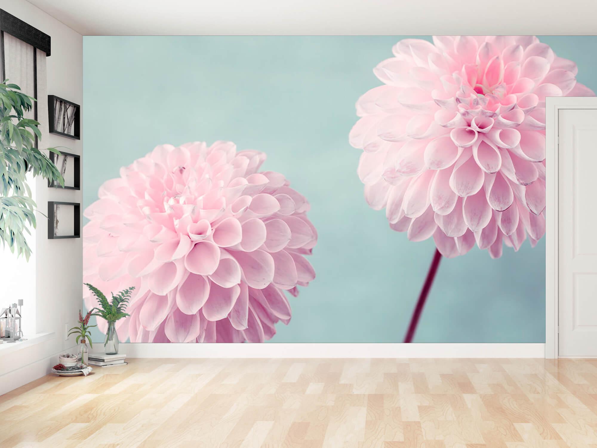 Deux fleurs de Dahlia 16