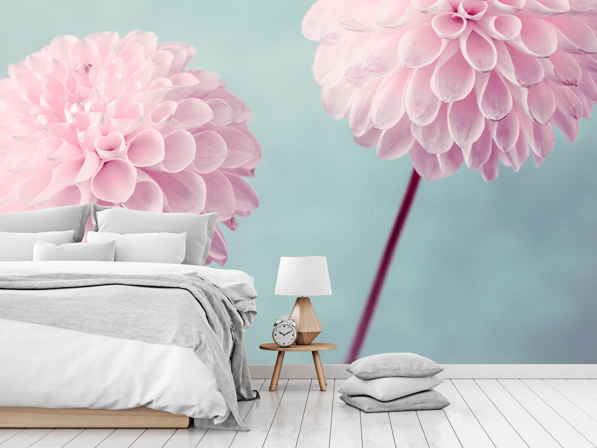 Deux fleurs de Dahlia 8