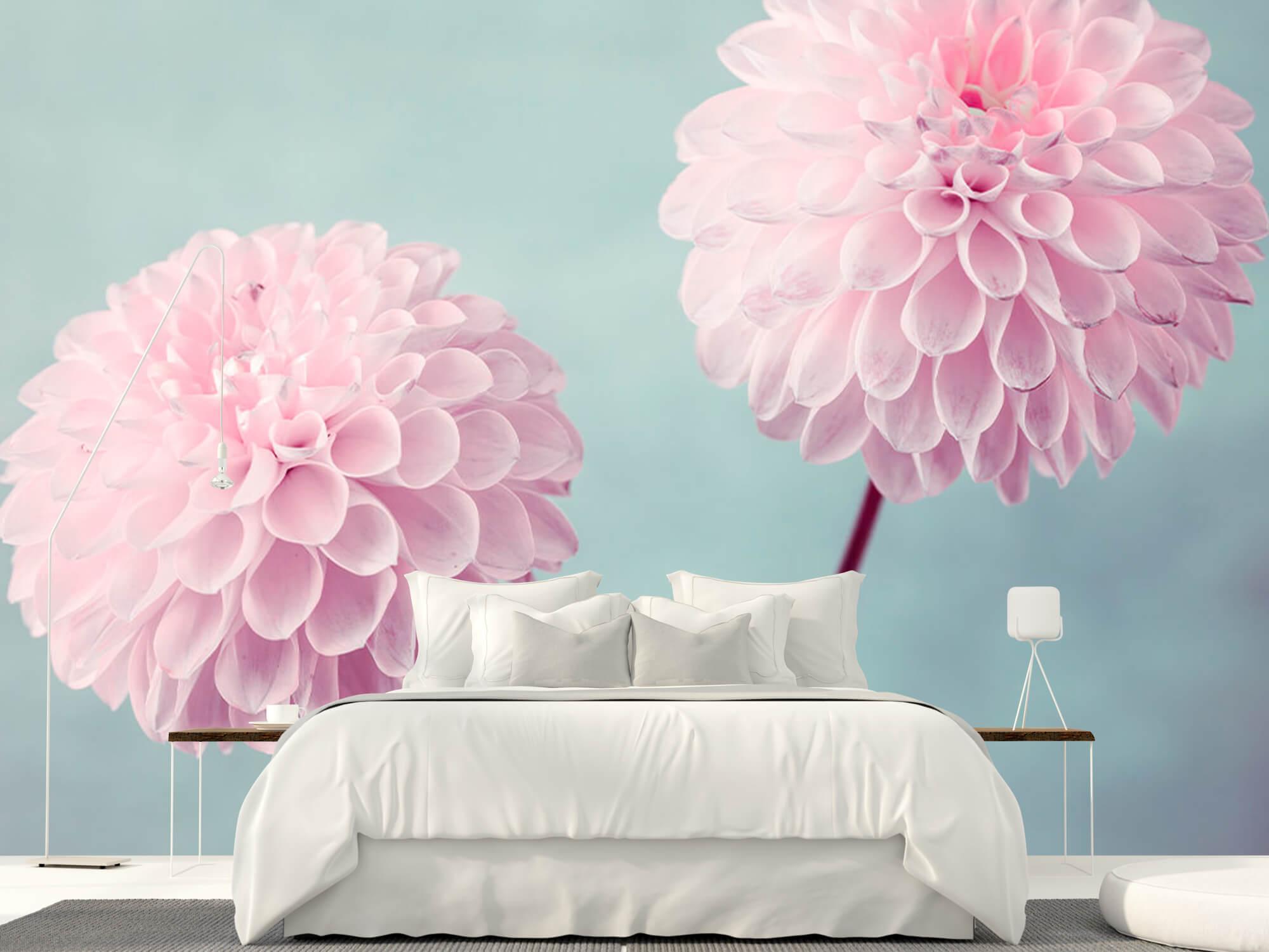 Deux fleurs de Dahlia 11