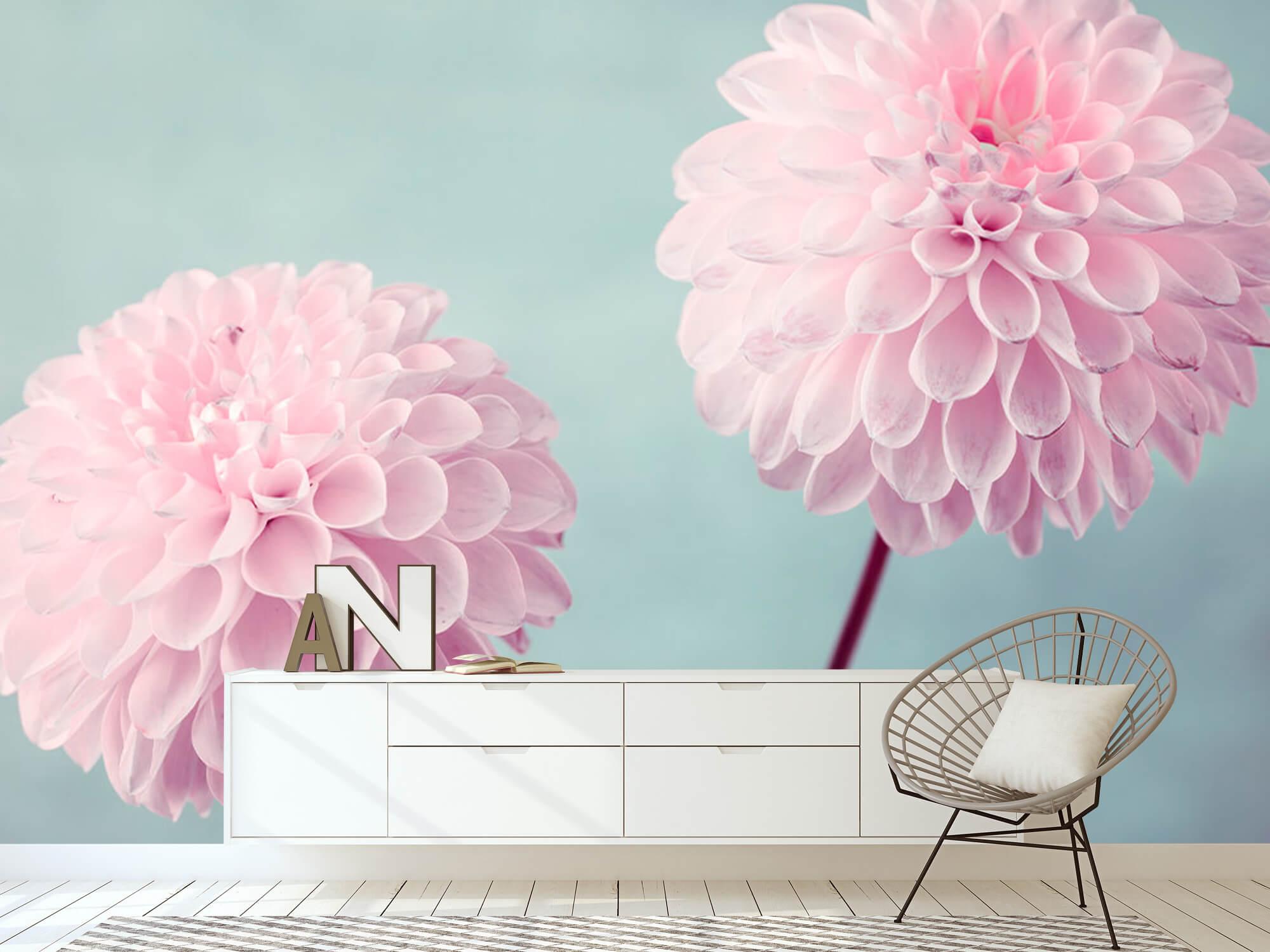Deux fleurs de Dahlia 9