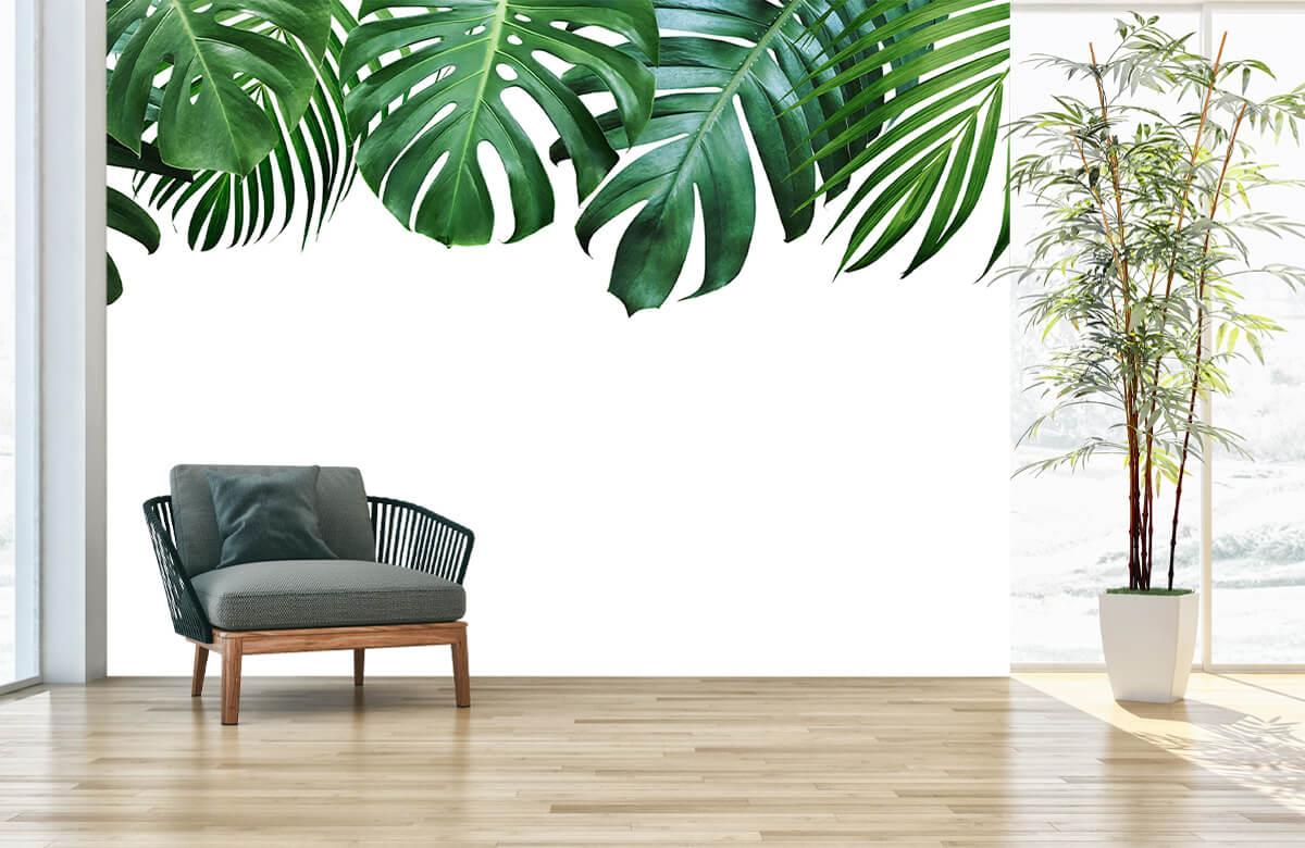 Plantes tropicales 2