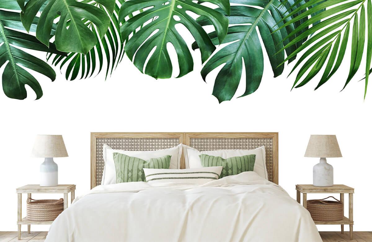 Plantes tropicales 1